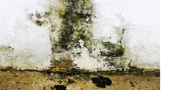 Mold, Dry Wall, Mold damage